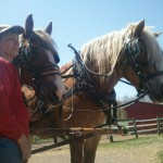 Deb with Draft Horse